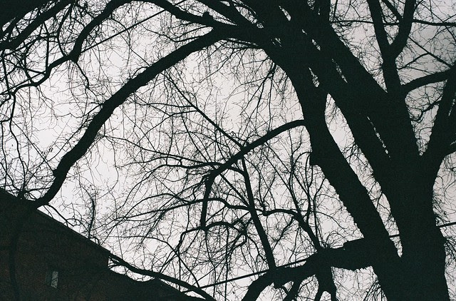 winter trees, northwest portland