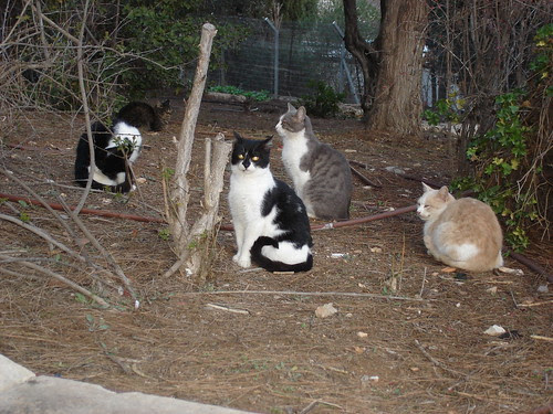 Cat colony