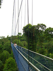 MacRitchie Tree Top Walk