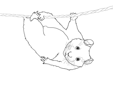 98 Hamster Ball Coloring Pages  Images