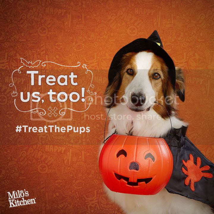 Trick or Treat with your pup this Halloween. @cupcake_n_bake @milkbone