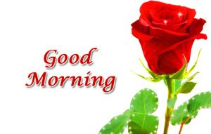 Saturday Good Morning Images Wallpaper Pictures With Red Rose