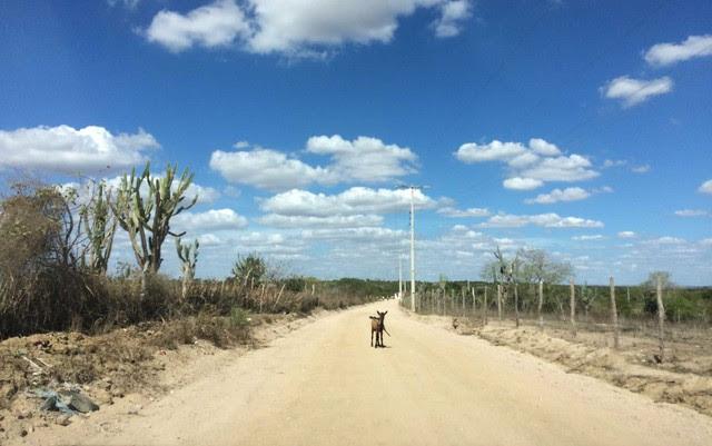 Seca atinge município de Valente, na Bahia, que já era é incluído na região do semiárido brasileiro | Foto: Henrique Mendes/G1