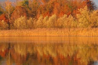 Colori del cannetto in autunno - FOTO DI RICCARDO AGRETTI