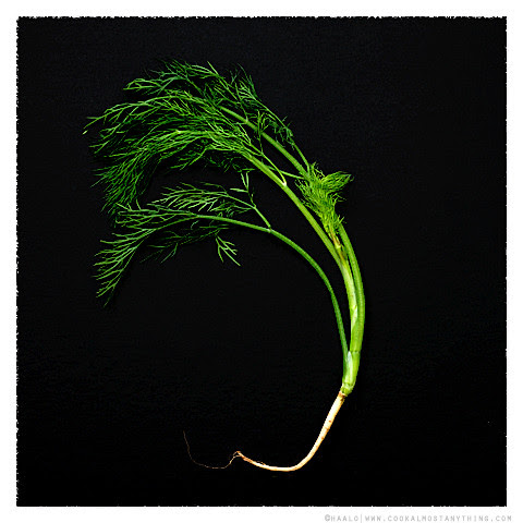 dill© by Haalo