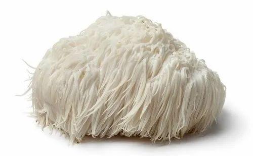 What is Lion's Mane Mushroom good for?