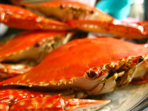 Chinese Steamed Crab 清蒸花蟹 Chinese Recipes At