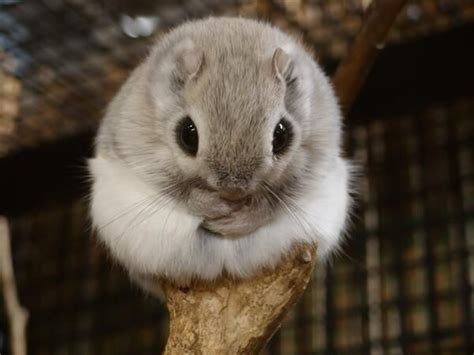 17 Best images about Ezo Momonga on Pinterest   A tree, Posts and Home