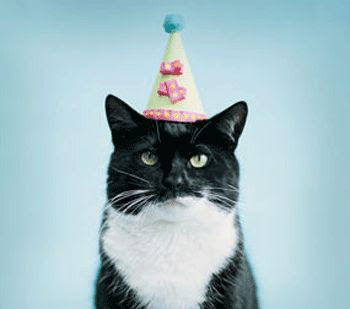 birthday cat. black and white. tiny party hat. Bursdagspu. Av den glade typen.