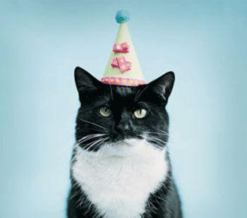 birthday cat. black and white. tiny party hat. Bursdagspu. Av den glade typen.