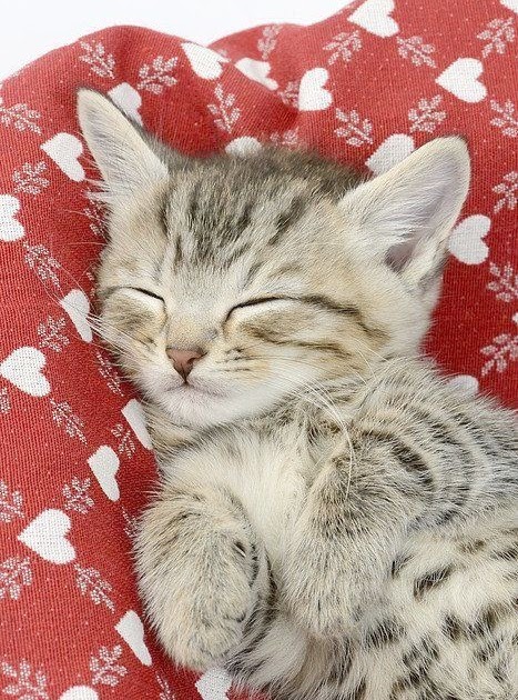 Cute Kitten Cute Cat Pic For Dp Kitten