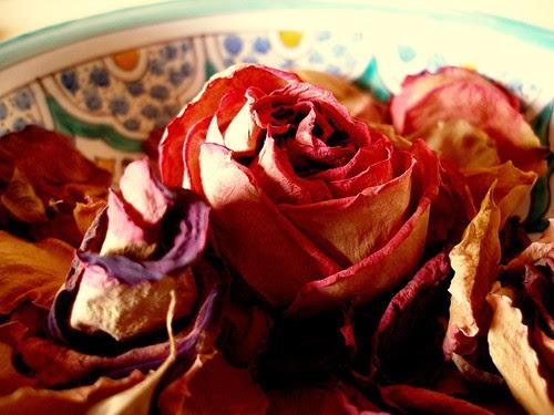 Rosen aus Andalusien