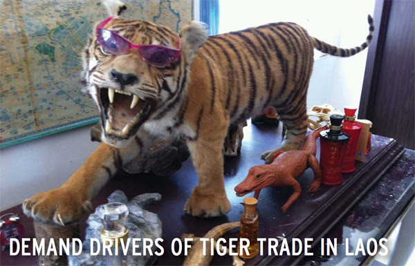 Stuffed tiger in Laos