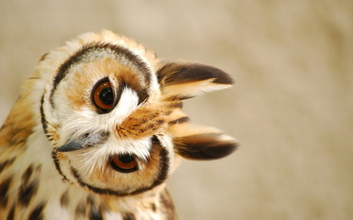 Cute Owl Wallpaper 1440x900 45988