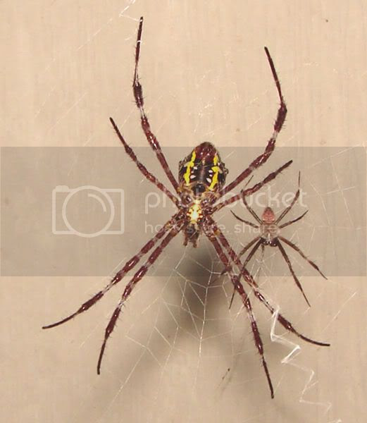 arachnid and dinner yesterday