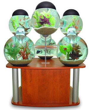 Aquarium Decoration Ideas on Cool Home Aquariums   Spot Cool Stuff  Design