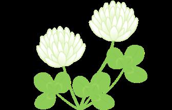 シロツメクサの検索結果 イラスト緑花ryokka