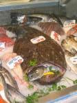 Kleinmarkthalle: Seeteufel und andere Fische 16.10.03