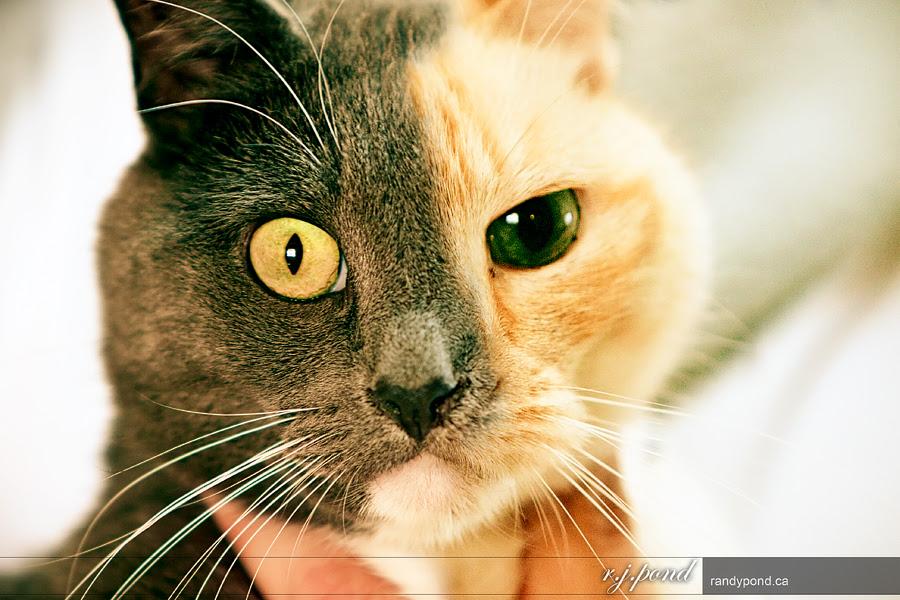 ~ 123/365 Cat Dualism ~