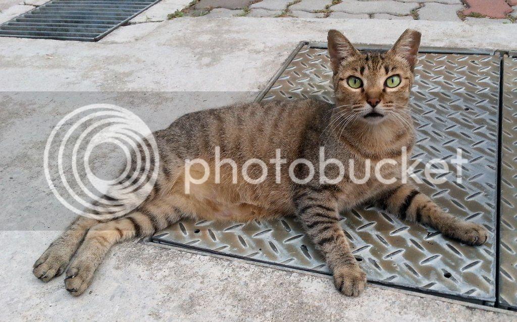 photo CatSimsP03.jpg