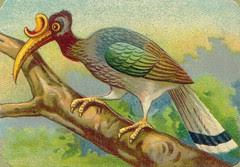 oiseauchromos 4