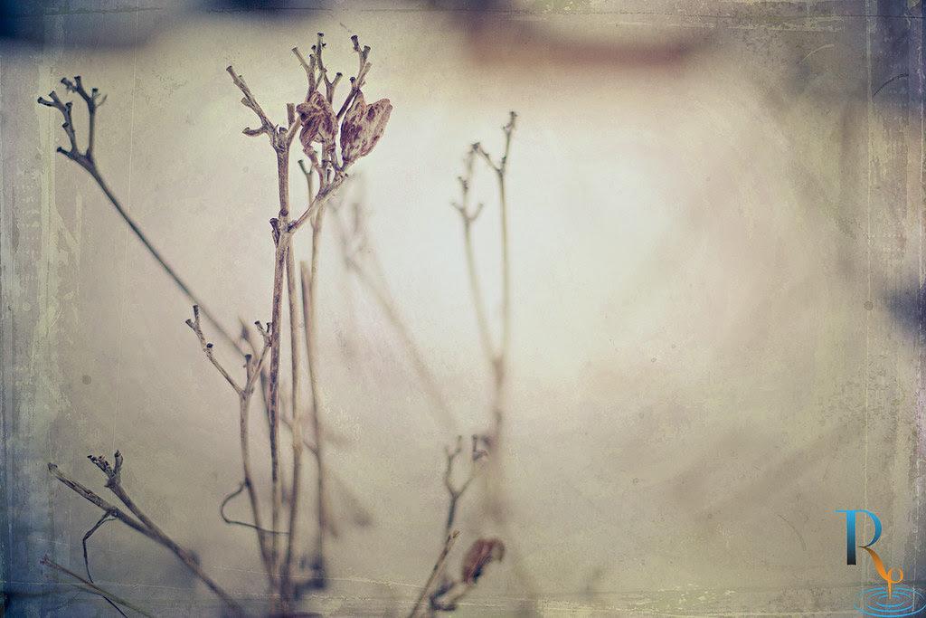 ~ 12/365 Quiet Winter Day ~