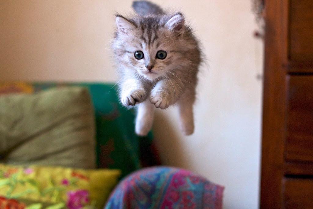 Happeh Kitty