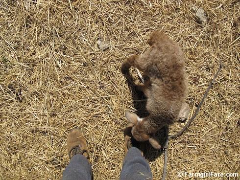 Random Lamb Snaps 1