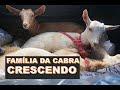 Produção de cabras de leite no Sertão do Ceará