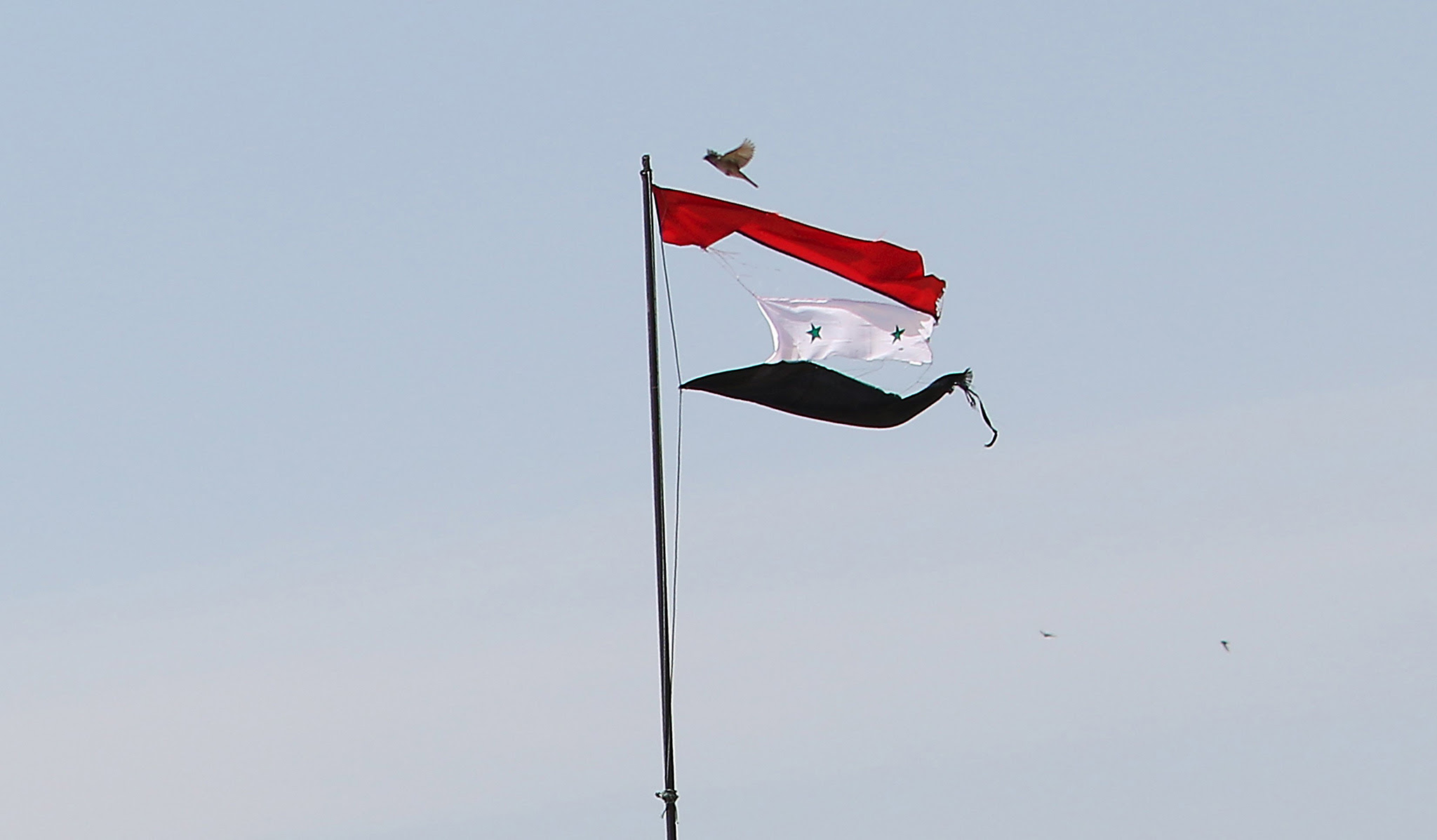 A bird flies near a torn Syrian national flag in the city of Qamishli, Syria April 21,