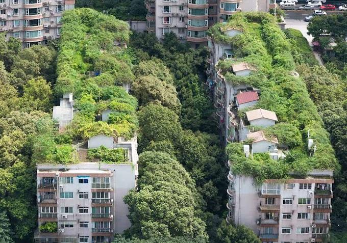 AZOTEAS VERDES: BENEFICIOS PARA EL CONSUMO DE ENERGÍA