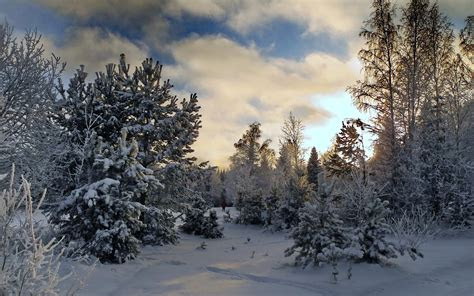 nice winter trees snowy field wallpapers nice winter