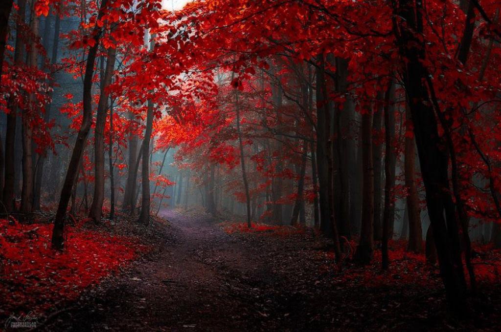 Os bosques outonais oníricos de um fotógrafo tcheco 06