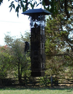 Squirrel-be-gone feeder and chickadee