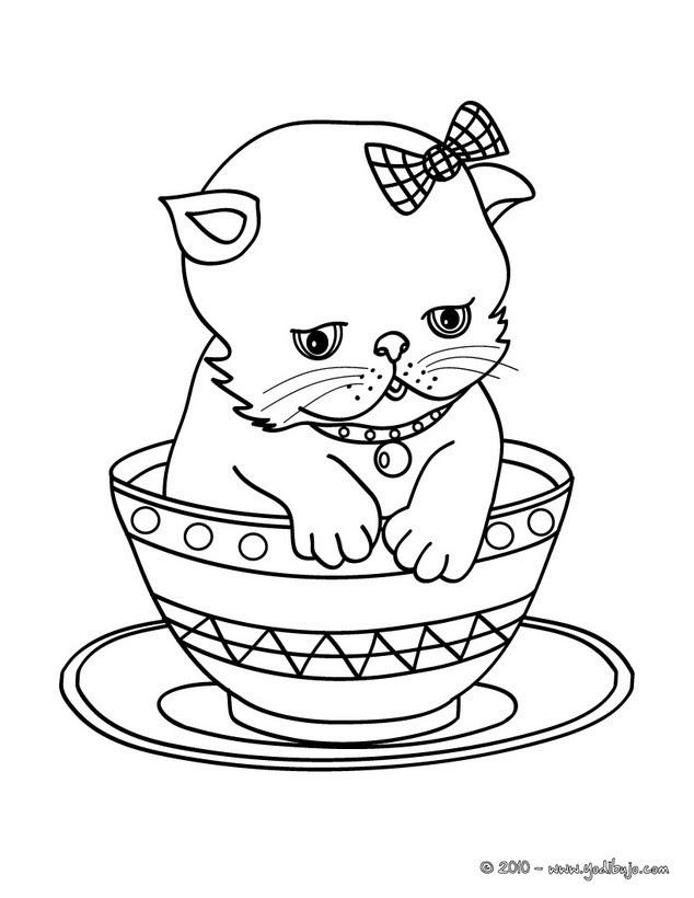 Dibujos Para Colorear Gato Persa En Una Tasa Eshellokidscom