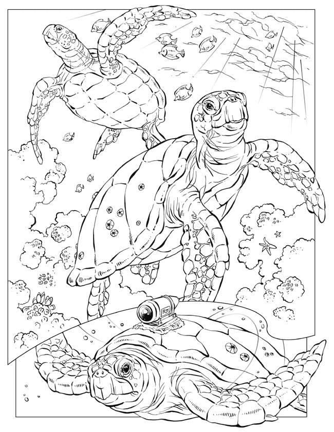 34 Ocean Coloring Pages Pdf - Free Printable Coloring Pages