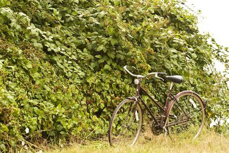 blackberry bush: A bicycle leaning against blackberry bush in a field by the sea Stock Photo