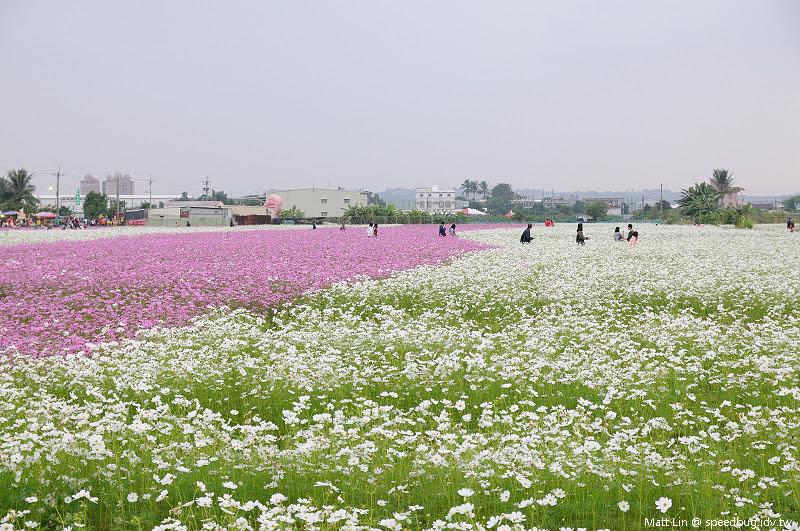 大寮花海 (19).jpg