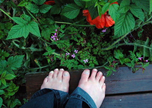 rainy garden :: regn i hagen