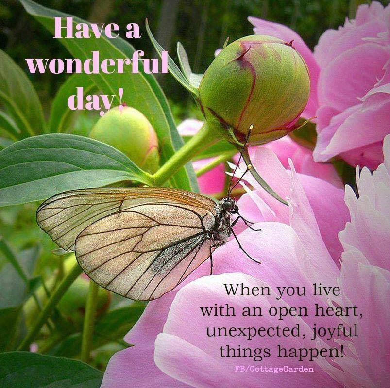 Have A Wonderful Day Spring Quote Pictures Photos And Images For