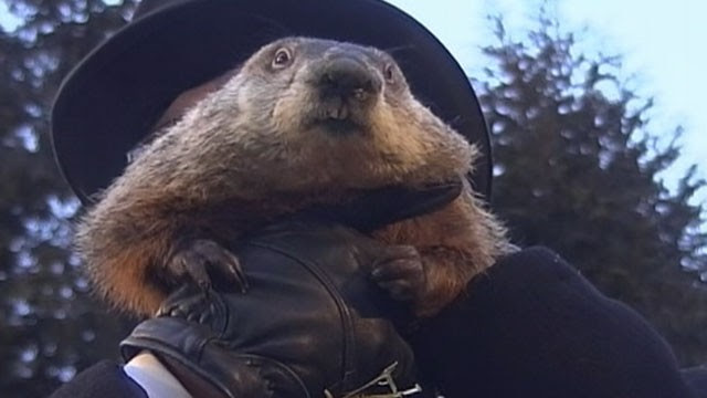 "PHOTO: An early spring is on the way, according to groundhog ""Punxsutawney Phil."" When the Pennsylvania groundhog emerged from his dwelling at Gobbler's Knob on Feb 2, 2013, he did not see his shadow."