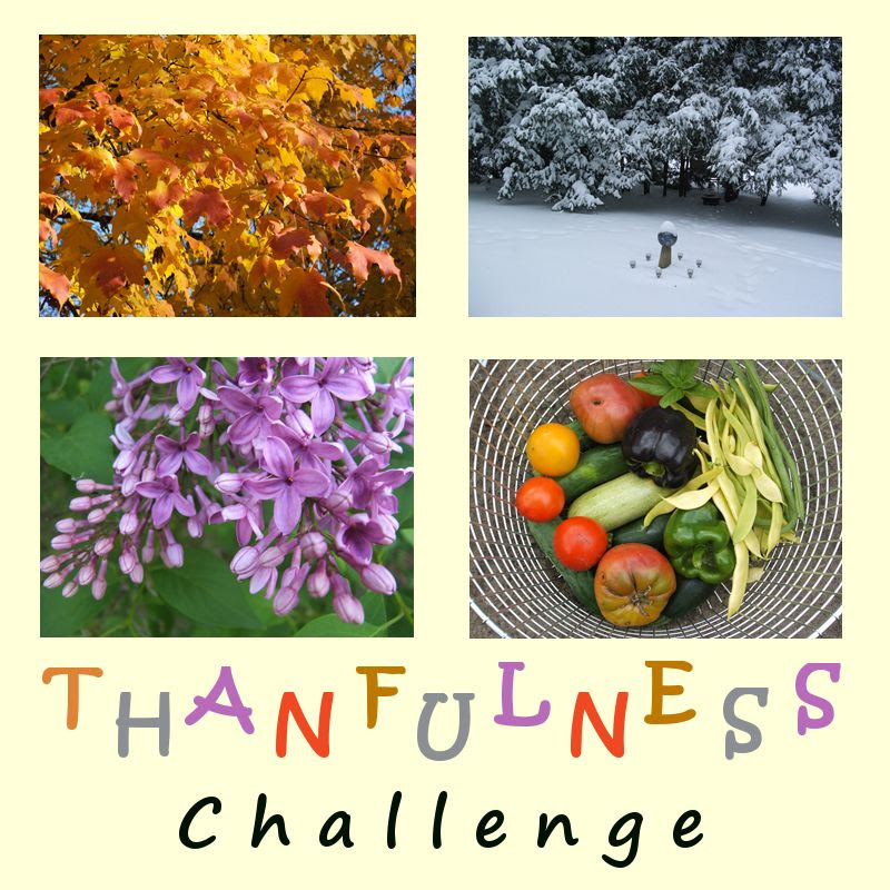 by Angie Ouellette-Tower for http://www.godsgrowinggarden.com/ photo ThankfulnessChallenge_zpsvqzsznkx.jpg