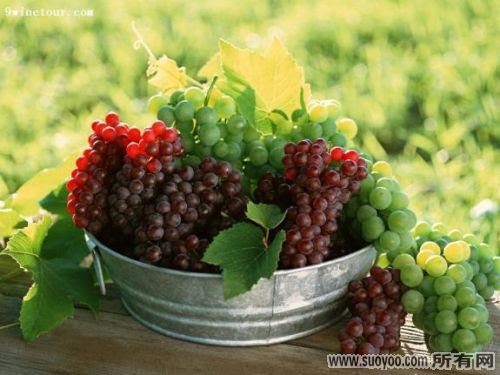 Grape-Seed-Extract-