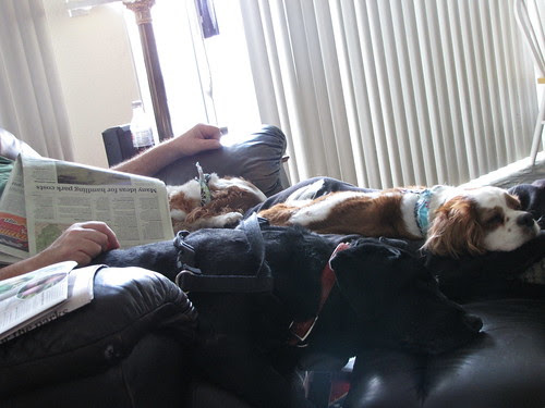 triple dog dare you