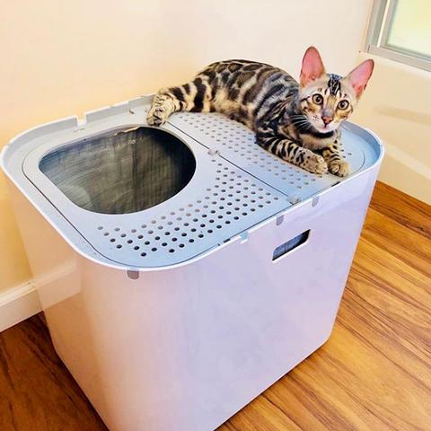 How Often Do You Change A Cats Litter Box