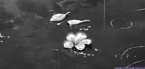 pastel black  white flower anime gif rain