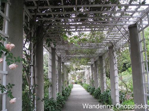 The Huntington Library, Art Collections, and Botanical Gardens (Rose Garden) (Spring) - San Marino 5
