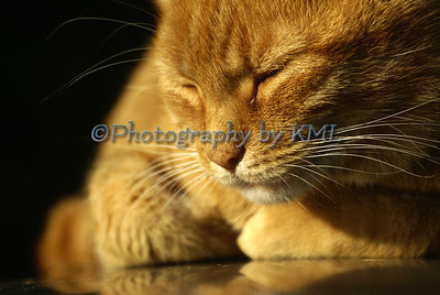 a rust colored cat sleeping in the evening light