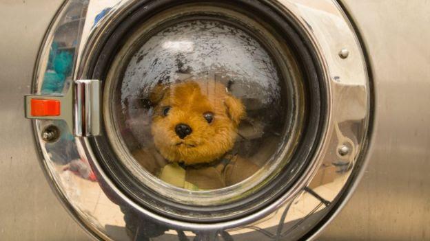 A teddy in a washing machine