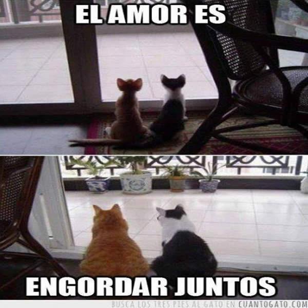 Imagenes Graciosas De Animales En Facebook Mundo Imagenes Frases